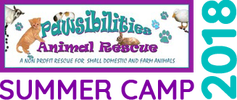 PAWSIBILITIES ANIMAL RESCUE SUMMER CAMP 2018