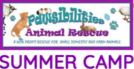 PAWSIBILITIES ANIMAL RESCUE SUMMER CAMP 2019